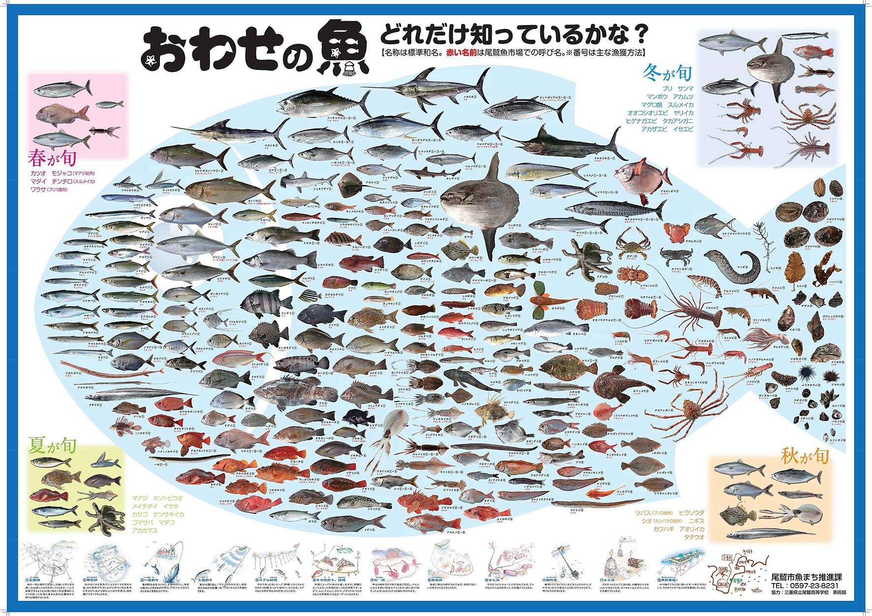 おわせの魚 どれだけ知っているかな?